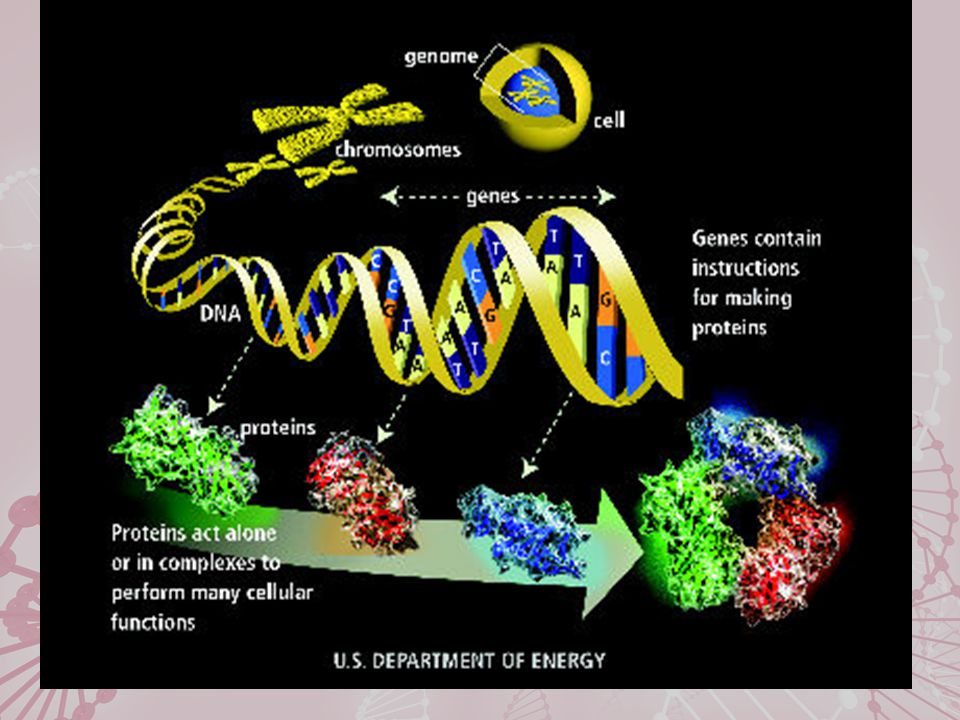 GABRA2 and AUDs Edenberg et al., 2004 Region contains: GABRG1 GABRA2 GABRA4 GABRB1