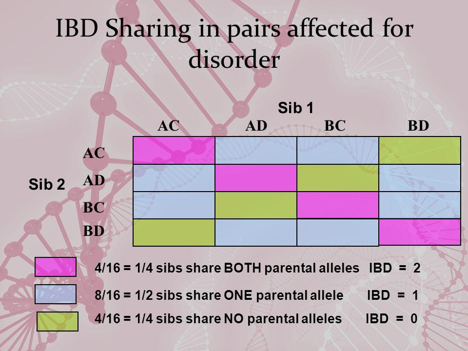 IBD Sharing in pairs affected for disorder Sib 1 Sib 2 4/16 = 1/4 sibs share BOTH parental alleles IBD = 2 8/16 = 1/2 sibs share ONE parental allele IBD = 1 4/16 = 1/4 sibs share NO parental alleles IBD = 0 ACADBCBD AC BC BD AD