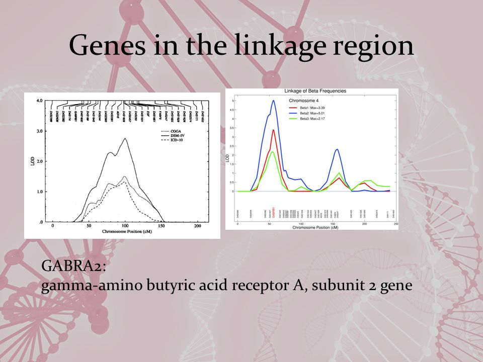 Genes in the linkage region GABRA2: gamma-amino butyric acid receptor A, subunit 2 gene