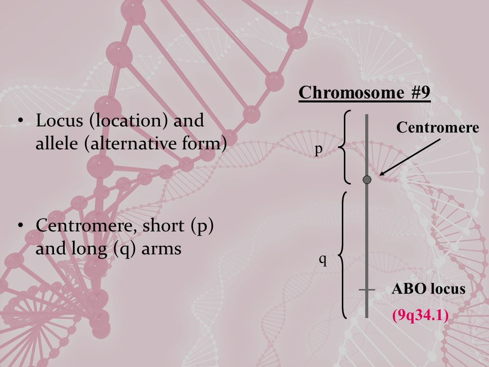 Definitions Chromatin: genetic material contained in chromosomes – DNA & proteins (histones and nonhistones) Euchromatin – less condensed/light bands; coding DNA Heterochromatin – compacted/dark bands, usually noncoding DNA Chr 21 UM Bauer