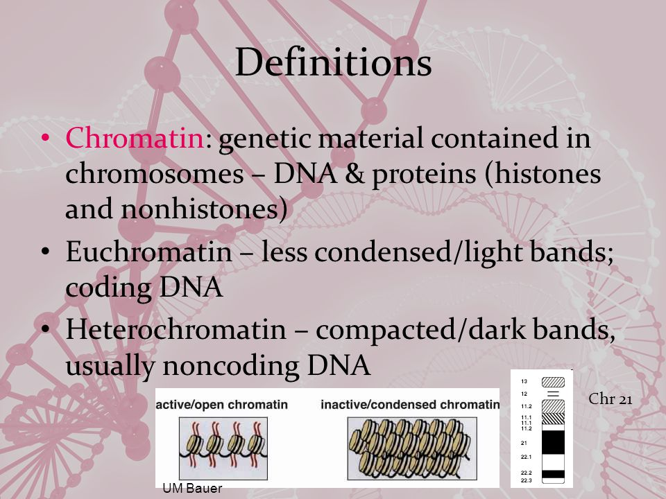 Definitions DNA: Deoxy ribonucleic acid Purine and pyrimidine bases Purines: Cytosine, Thymine Pyrimidines: Adenine, Guanine Double stranded (each strand has full information content) Strands are held together by (hydrogen) bonds that form between the nucleotide bases of the DNA molecule Adenine (A) Thymine (T) Guanine (G) Cytosine (C)