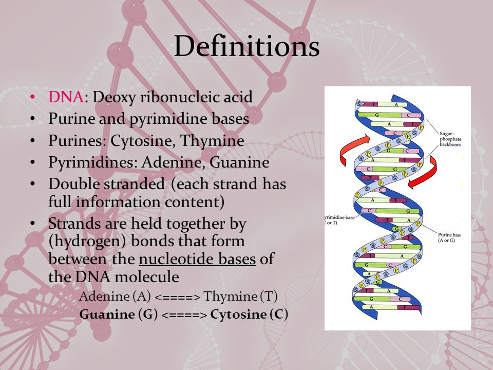 Definitions Gene: A sequence of DNA (a locus on a chromosome) that is involved in ( codes for ) the synthesis of a functional polypeptide (proteins consist of one or more polypeptides, which are strings of amino acids).