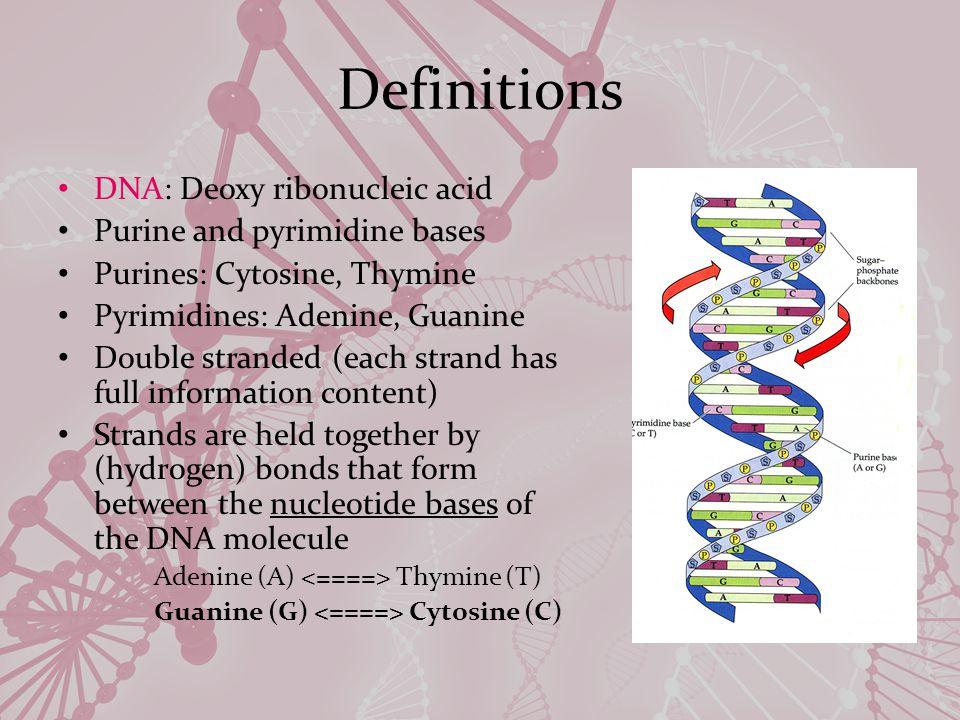 Pathway of Alcohol Metabolism AlcoholAcetaldehydeAcetate ADHALDH