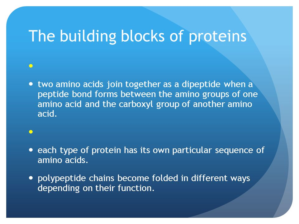 The building blocks of proteins two amino acids join together as a dipeptide when a peptide bond forms between the amino groups of one amino acid and the carboxyl group of another amino acid.