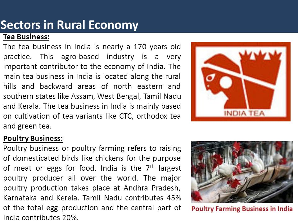 Sectors in Rural Economy Tea Business: The tea business in India is nearly a 170 years old practice.