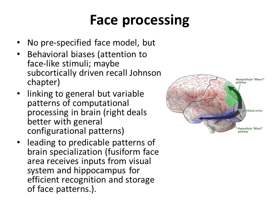 Face processing No pre-specified face model, but Behavioral biases (attention to face-like stimuli; maybe subcortically driven recall Johnson chapter) linking to general but variable patterns of computational processing in brain (right deals better with general configurational patterns) leading to predicable patterns of brain specialization (fusiform face area receives inputs from visual system and hippocampus for efficient recognition and storage of face patterns.).