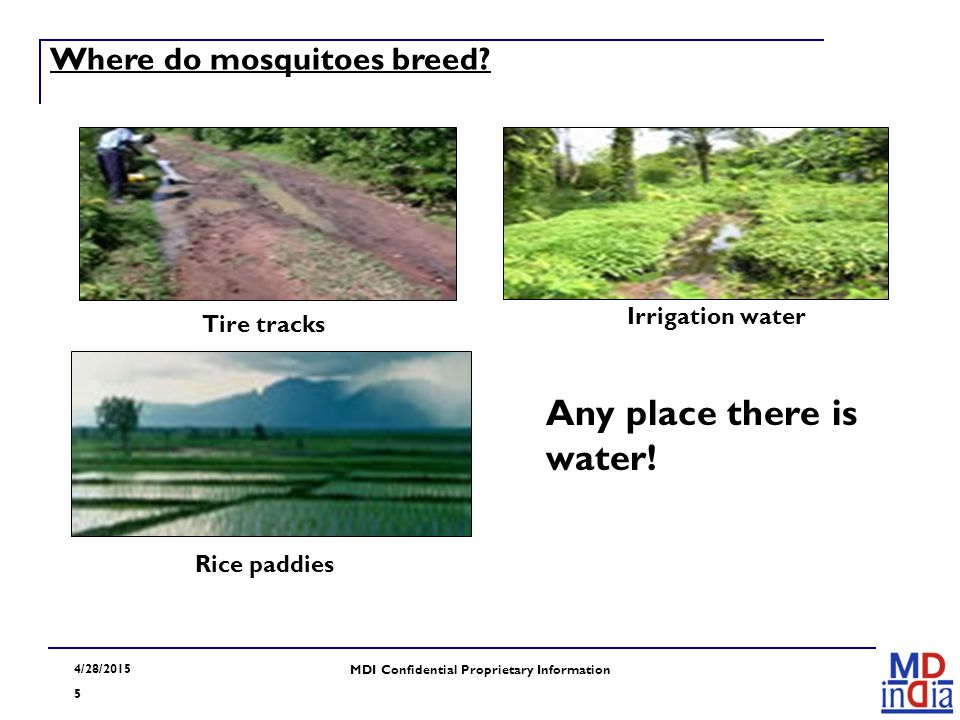 4/28/2015 5 MDI Confidential Proprietary Information Where do mosquitoes breed? Tire tracks Irrigation water Rice paddies Any place there is water!