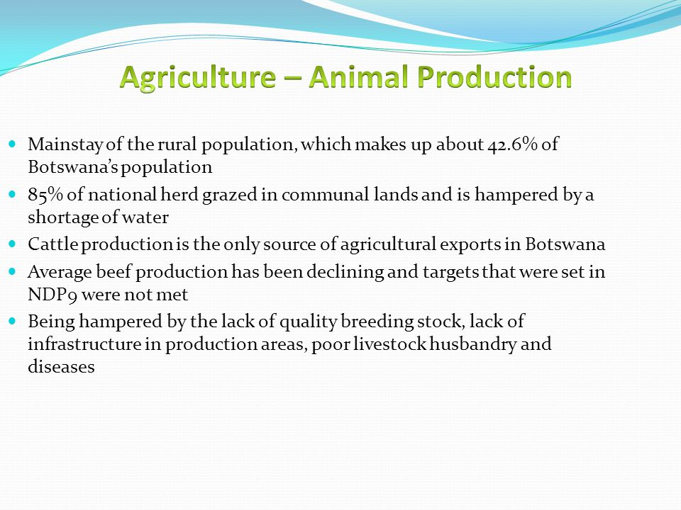Mainstay of the rural population, which makes up about 42.6% of Botswana's population 85% of national herd grazed in communal lands and is hampered by a shortage of water Cattle production is the only source of agricultural exports in Botswana Average beef production has been declining and targets that were set in NDP9 were not met Being hampered by the lack of quality breeding stock, lack of infrastructure in production areas, poor livestock husbandry and diseases