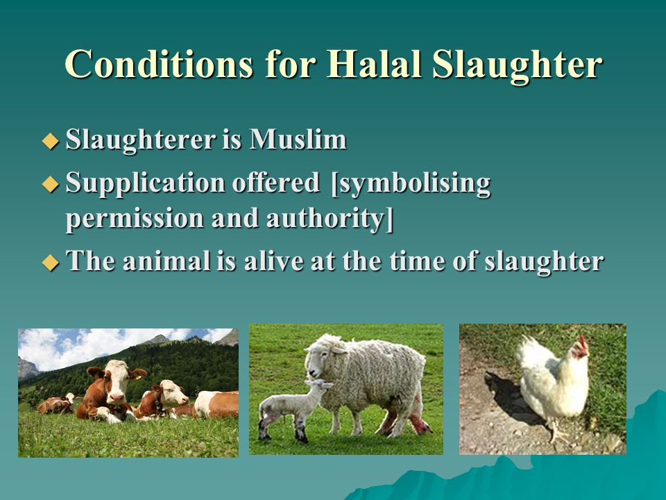 Conditions for Halal Slaughter  Slaughterer is Muslim  Supplication offered [symbolising permission and authority]  The animal is alive at the time of slaughter