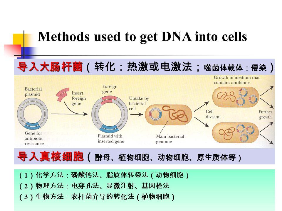 导入大肠杆菌 导入大肠杆菌(转化:热激或电激法; 噬菌体载体:侵染 ) 导入真核细胞 导入真核细胞( 酵母、植物细胞、动物细胞、原生质体等) ( 1 )化学方法:磷酸钙法、脂质体转染法(动物细胞) ( 2 )物理方法:电穿孔法、显微注射、基因枪法 ( 3 )生物方法:农杆菌介导的转化法(植物细胞) Methods used to get DNA into cells