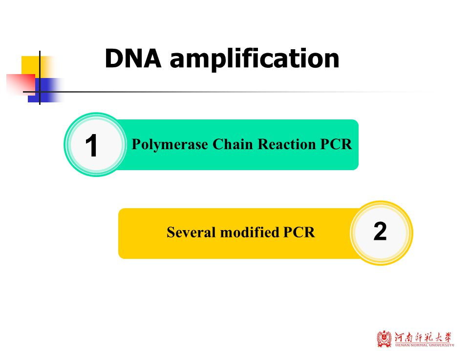 DNA amplification Polymerase Chain Reaction PCR 1 Several modified PCR 2