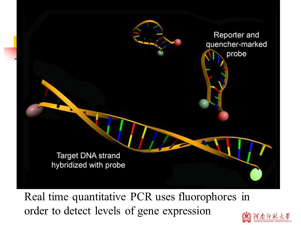 Real time quantitative PCR uses fluorophores in order to detect levels of gene expression