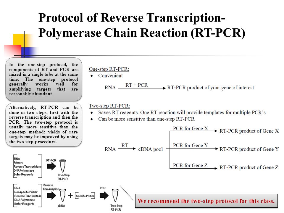Protocol of Reverse Transcription- Polymerase Chain Reaction (RT-PCR) In the one-step protocol, the components of RT and PCR are mixed in a single tub