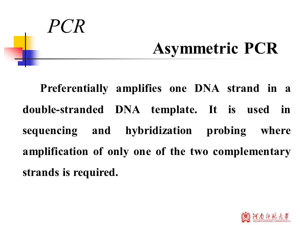Preferentially amplifies one DNA strand in a double-stranded DNA template.