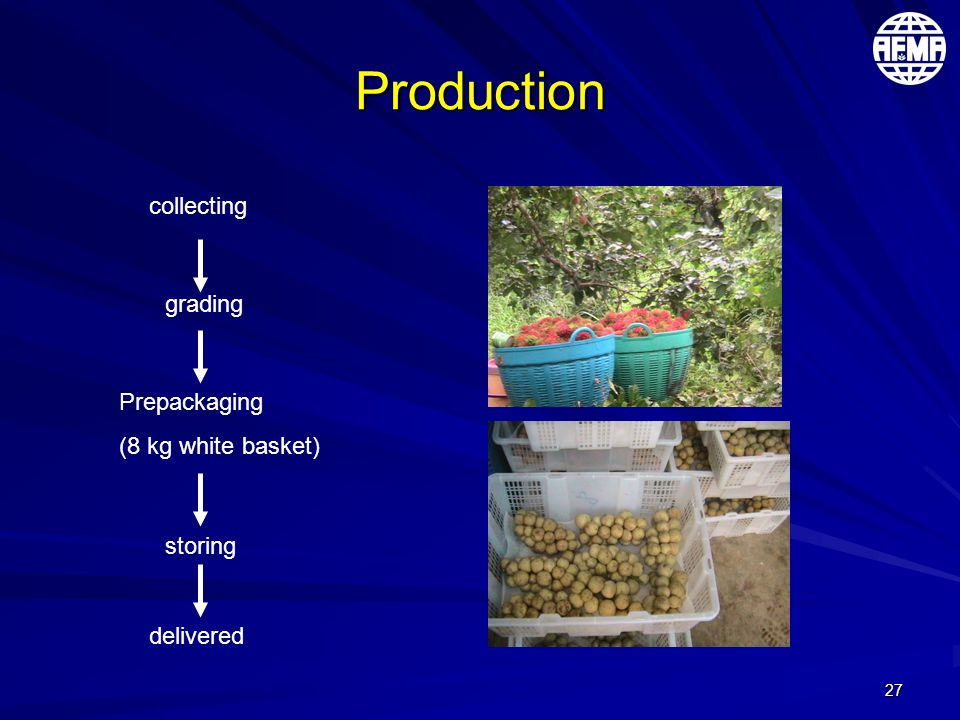 27 Production collecting grading Prepackaging (8 kg white basket) storing delivered