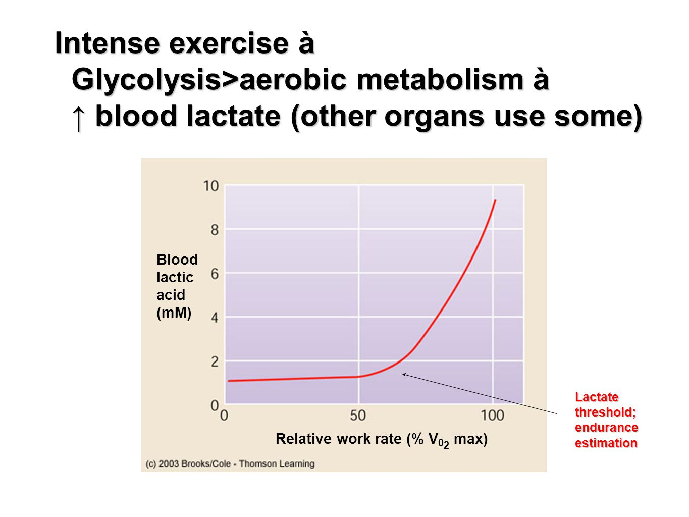 Blood lactic acid (mM) Relative work rate (% V 0 2 max) Intense exercise à Glycolysis>aerobic metabolism à ↑ blood lactate (other organs use some) Lac