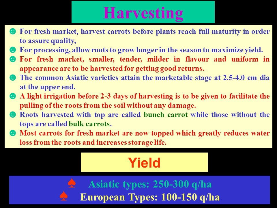 Harvesting ☻ For fresh market, harvest carrots before plants reach full maturity in order to assure quality, ☻ For processing, allow roots to grow lon