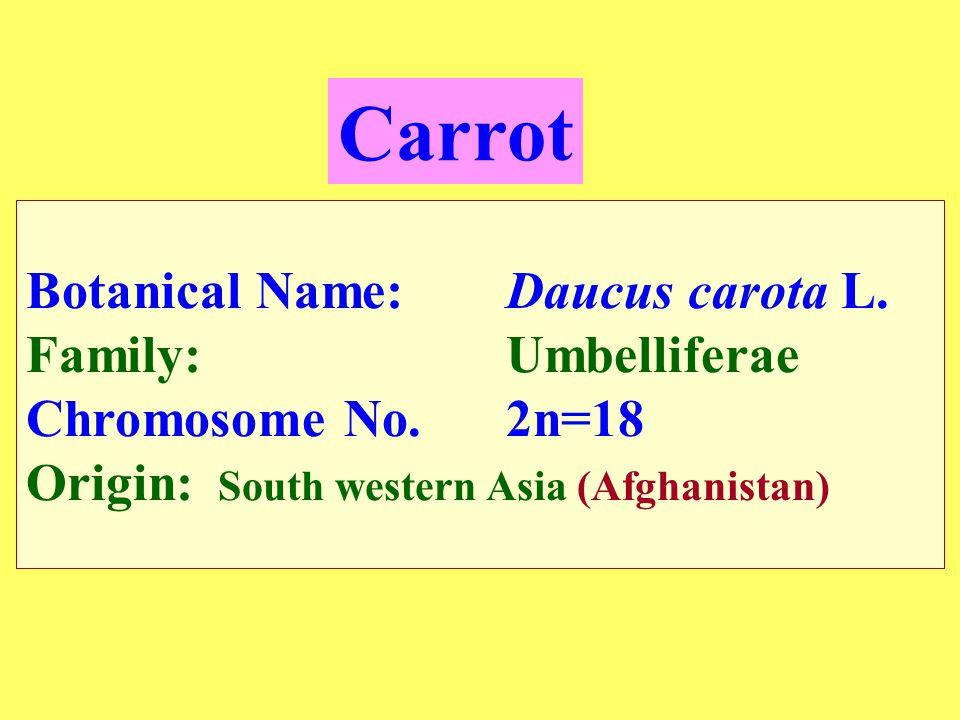 Botanical Name:Daucus carota L.