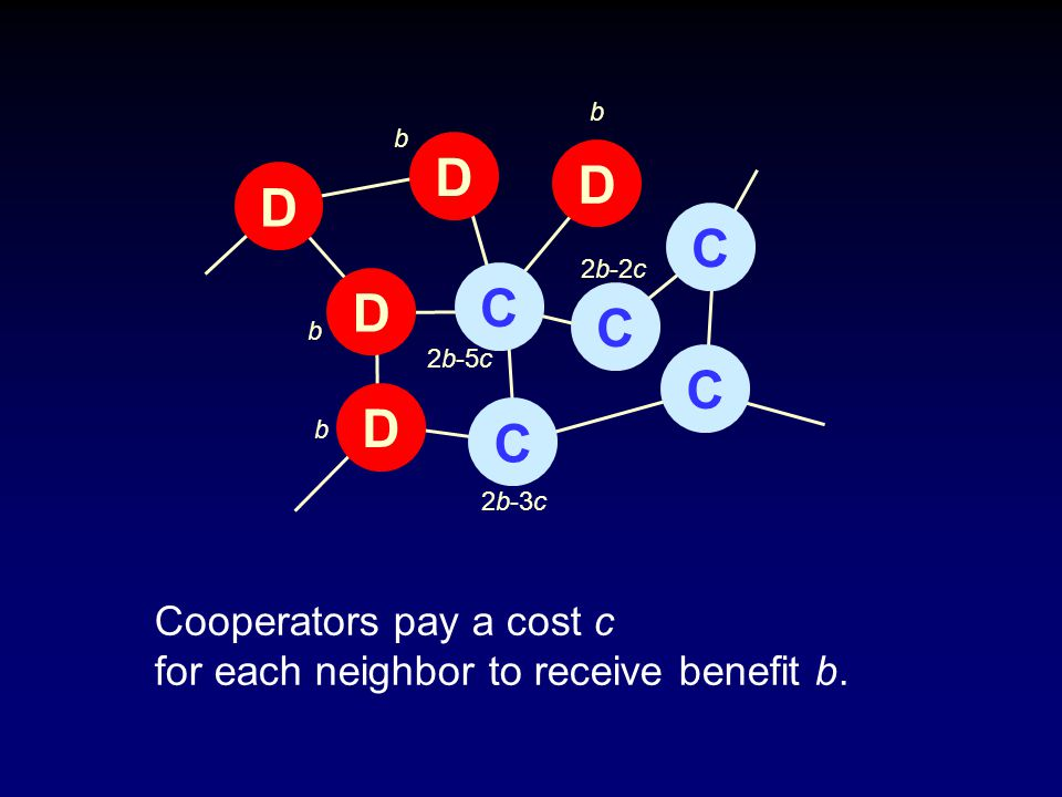 CCCCCDDDDD 2b-5c b 2b-3c 2b-2c b b b Cooperators pay a cost c for each neighbor to receive benefit b.