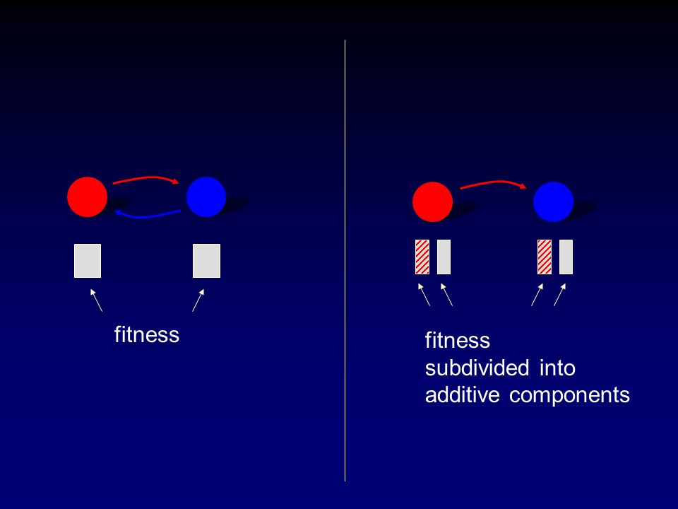 fitness subdivided into additive components