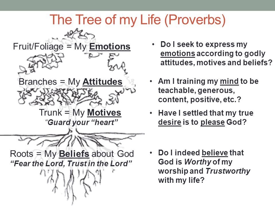 Roots = My Beliefs about God Fear the Lord, Trust in the Lord Trunk = My Motives Guard your heart Branches = My Attitudes Fruit/Foliage = My Emotions Do I indeed believe that God is Worthy of my worship and Trustworthy with my life.