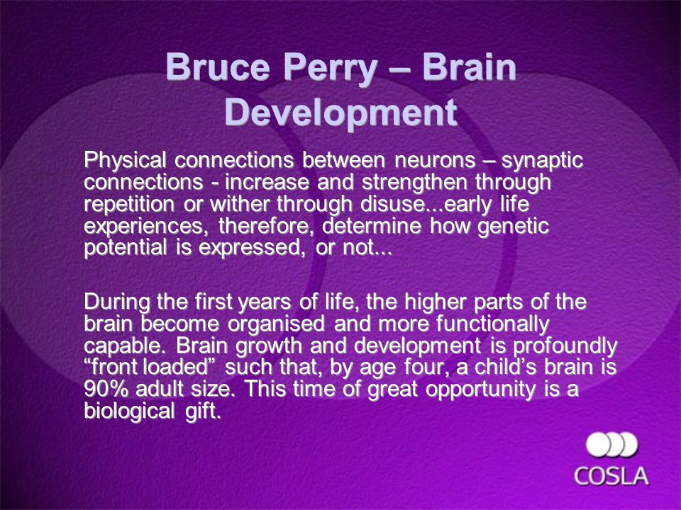 Bruce Perry – Brain Development Physical connections between neurons – synaptic connections - increase and strengthen through repetition or wither through disuse...early life experiences, therefore, determine how genetic potential is expressed, or not...