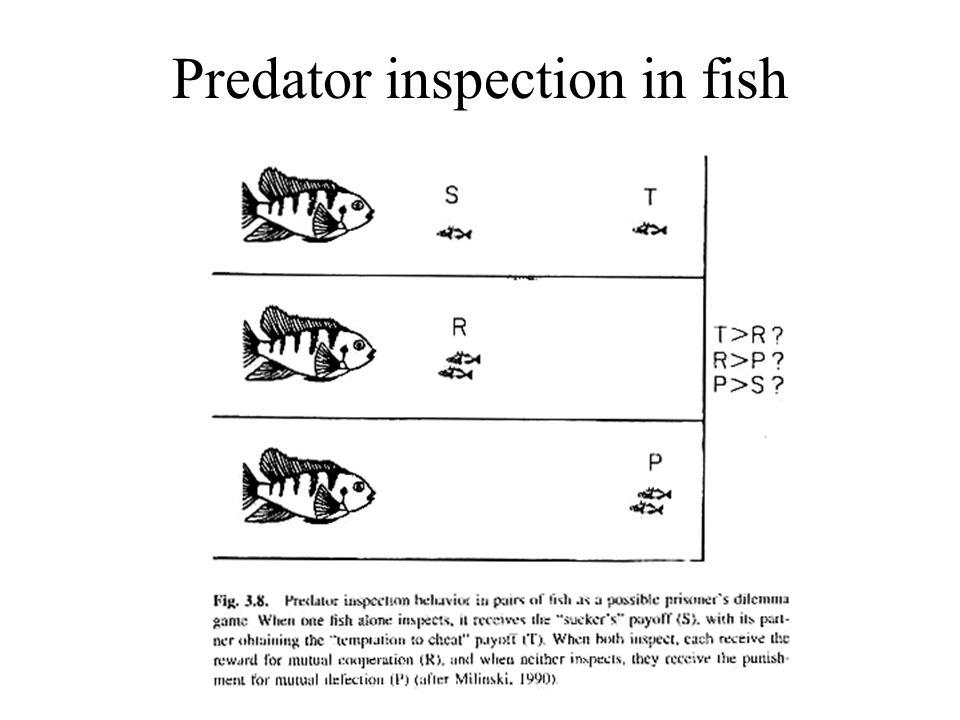 Predator inspection in fish
