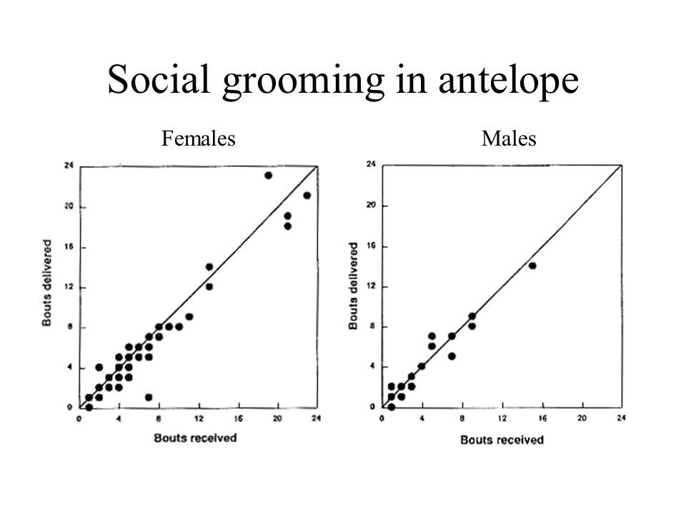 Social grooming in antelope FemalesMales