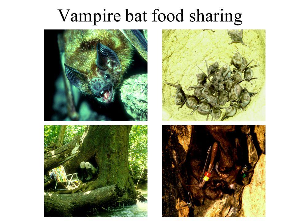 Vampire bat food sharing