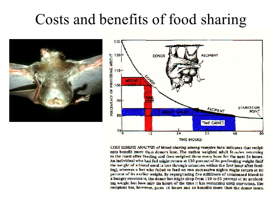 Costs and benefits of food sharing