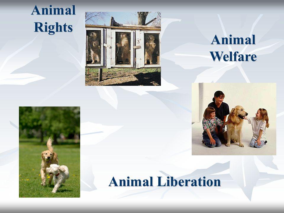 Animal Rights Animal Welfare Animal Liberation