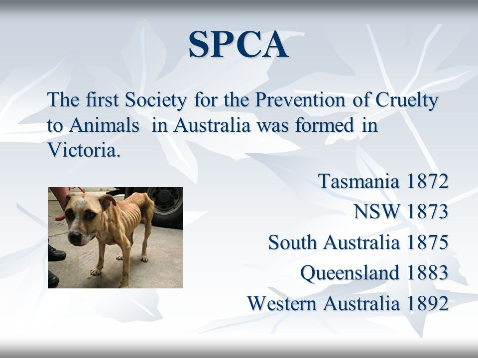 SPCA The first Society for the Prevention of Cruelty to Animals in Australia was formed in Victoria.