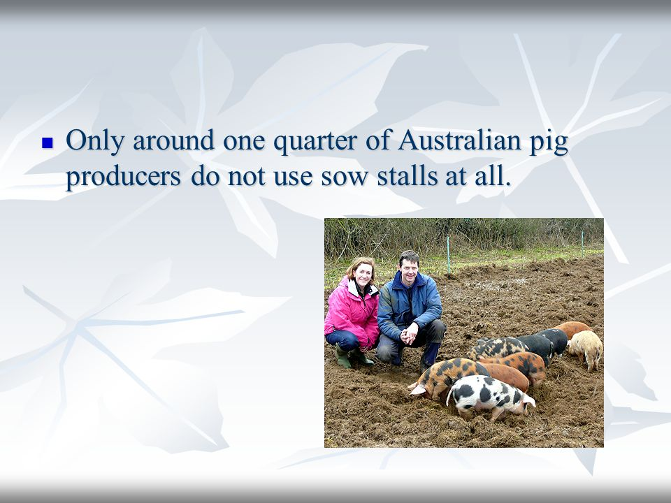 Only around one quarter of Australian pig producers do not use sow stalls at all.