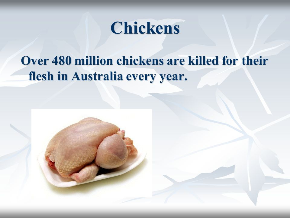 Chickens Over 480 million chickens are killed for their flesh in Australia every year.
