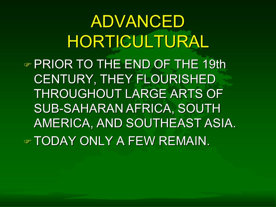 ADVANCED HORTICULTURAL F PRIOR TO THE END OF THE 19th CENTURY, THEY FLOURISHED THROUGHOUT LARGE ARTS OF SUB-SAHARAN AFRICA, SOUTH AMERICA, AND SOUTHEAST ASIA.