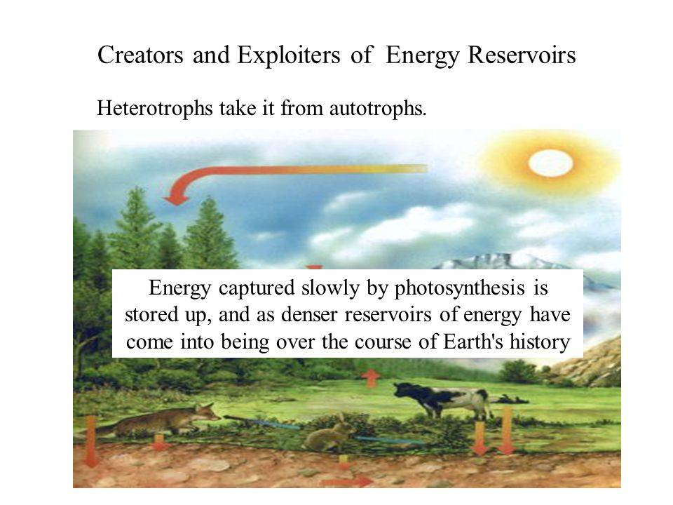 Creators and Exploiters of Energy Reservoirs Heterotrophs take it from autotrophs.