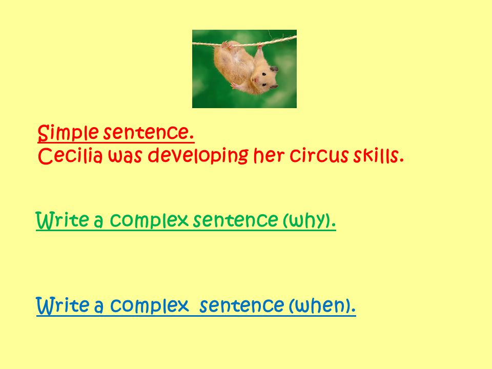 Simple sentence. Cecilia was developing her circus skills. Write a complex sentence (why). Write a complex sentence (when).