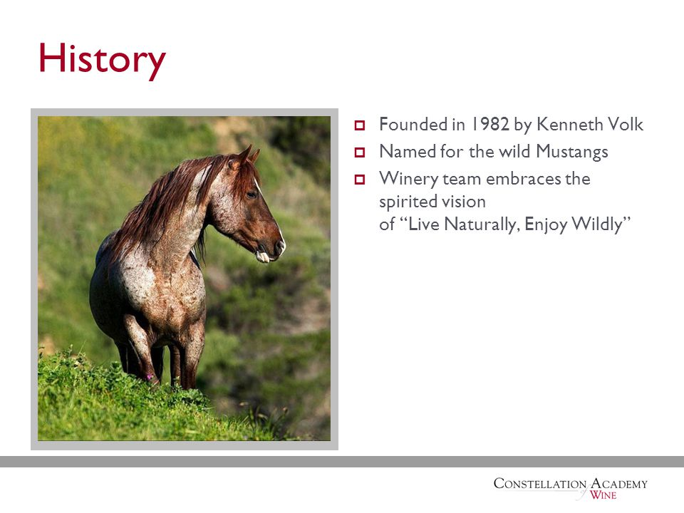 History  Founded in 1982 by Kenneth Volk  Named for the wild Mustangs  Winery team embraces the spirited vision of Live Naturally, Enjoy Wildly