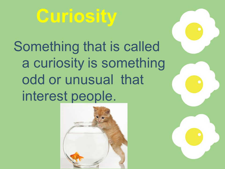 Curiosity Something that is called a curiosity is something odd or unusual that interest people.