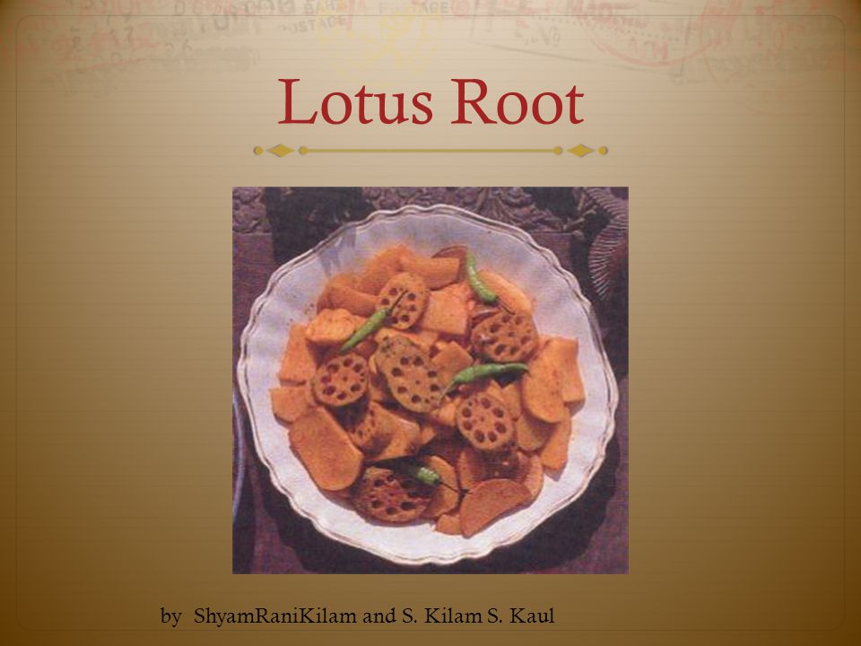 Lotus Root by ShyamRaniKilam and S. Kilam S. Kaul