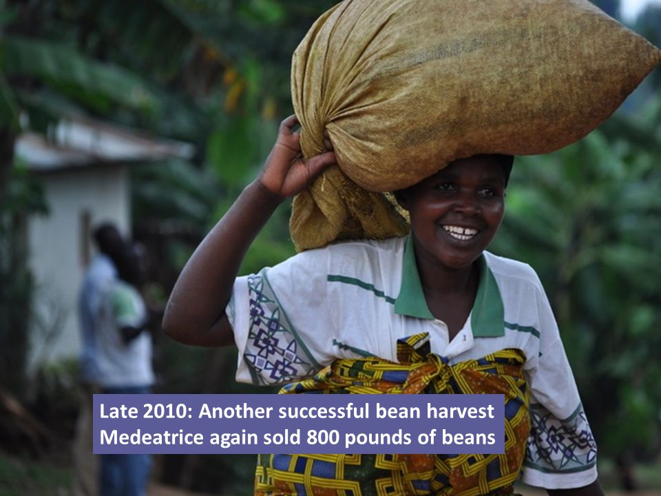 Late 2010: Another successful bean harvest Medeatrice again sold 800 pounds of beans