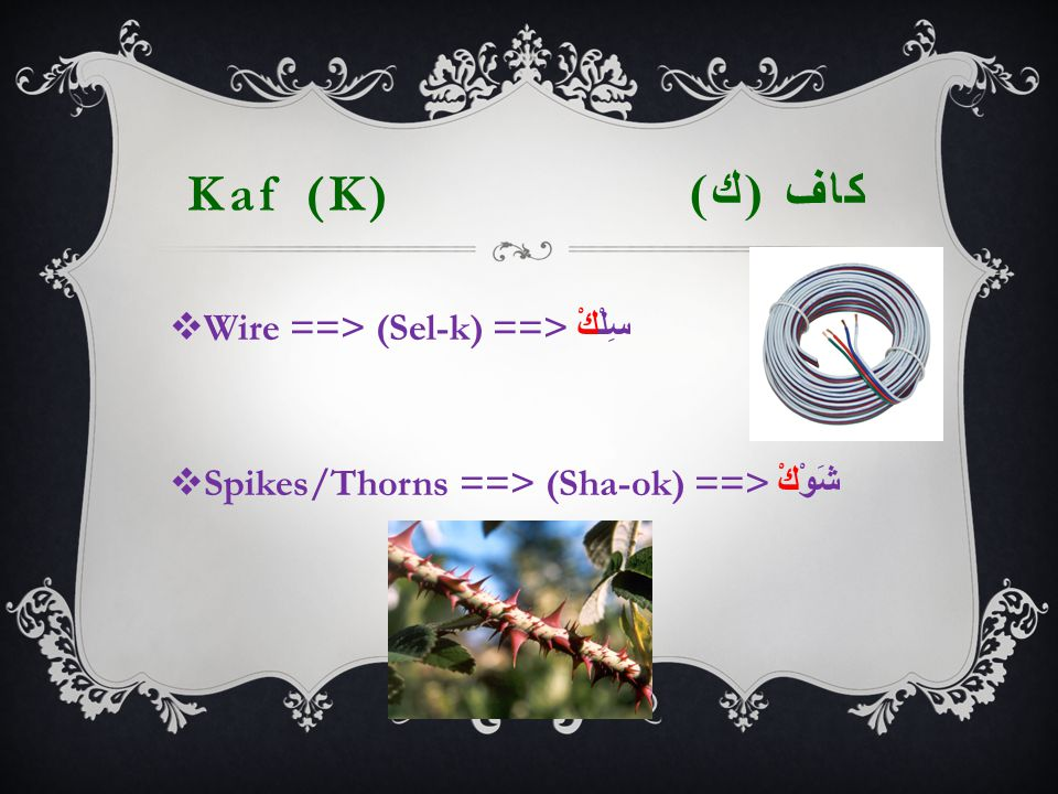 Kaf (K) كاف ( ك )  Wire ==> (Sel-k) ==> سِلْكْ  Spikes/Thorns ==> (Sha-ok) ==> شَوْكْ