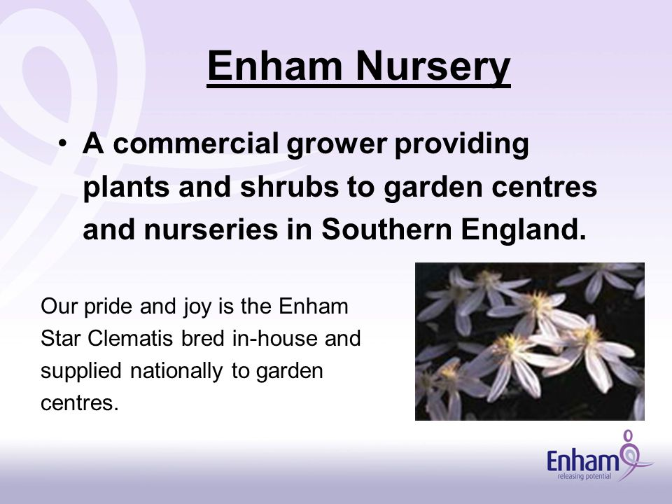 Enham Nursery A commercial grower providing plants and shrubs to garden centres and nurseries in Southern England.