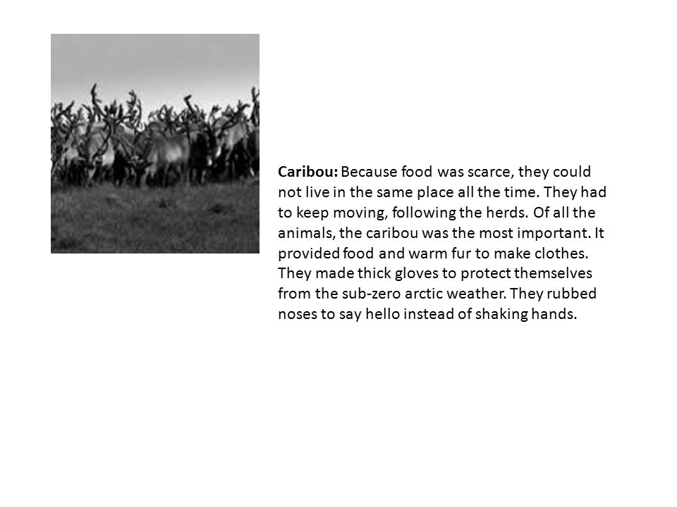 Caribou: Because food was scarce, they could not live in the same place all the time.
