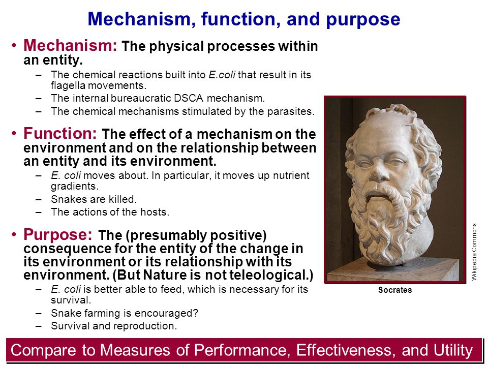 19 Mechanism, function, and purpose Mechanism: The physical processes within an entity.