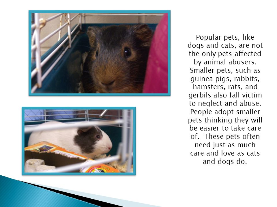 Bella sits in her clean cage thanks to the Project Safe Haven.