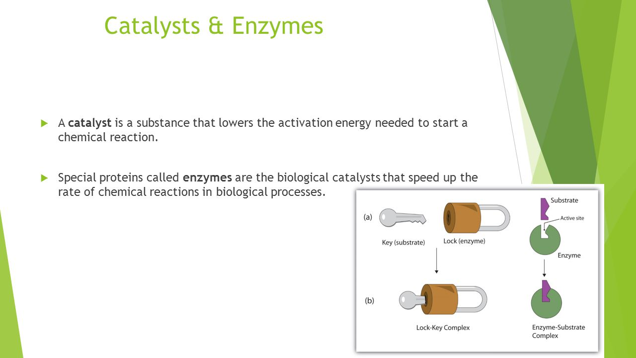 Catalysts & Enzymes  A catalyst is a substance that lowers the activation energy needed to start a chemical reaction.