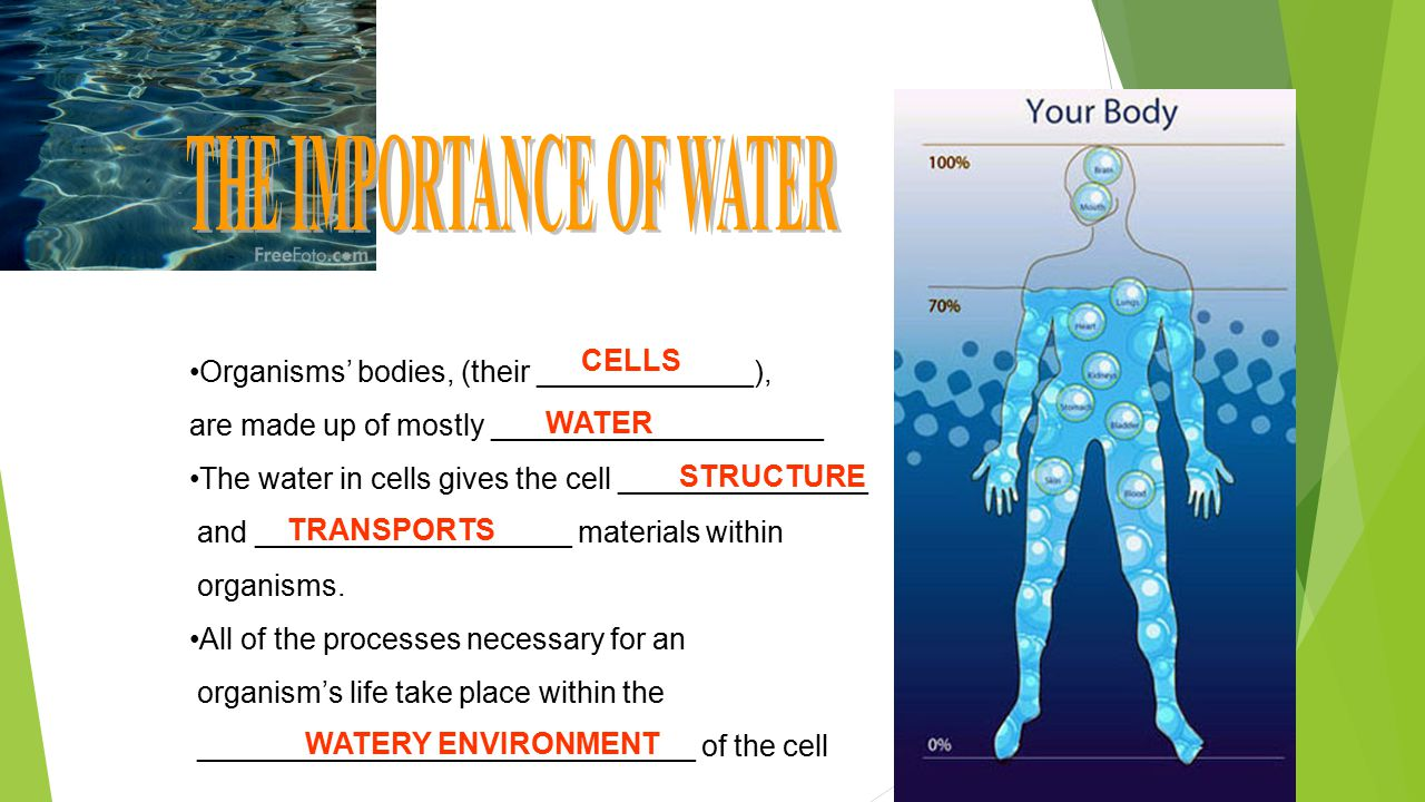Organisms' bodies, (their _____________), are made up of mostly ____________________ The water in cells gives the cell _______________ and ___________________ materials within organisms.