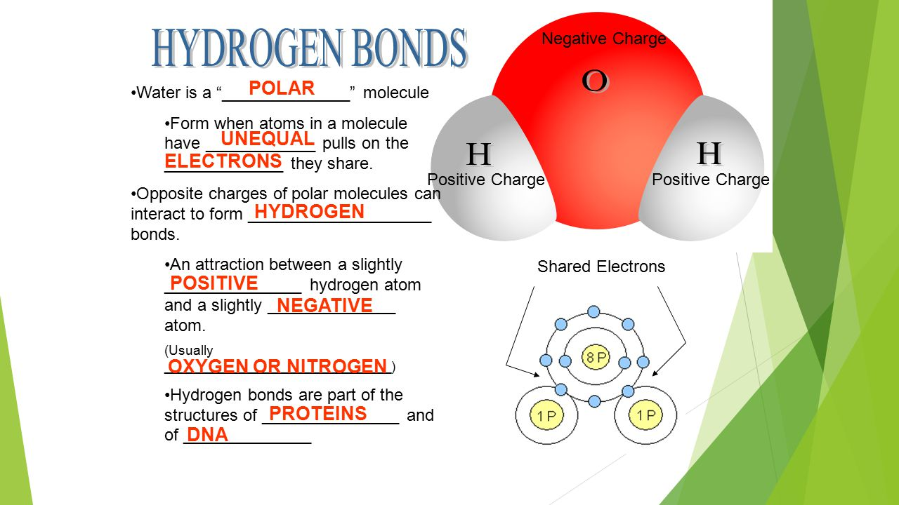 Negative Charge Positive Charge Water is a ______________ molecule Form when atoms in a molecule have ____________ pulls on the _____________ they share.