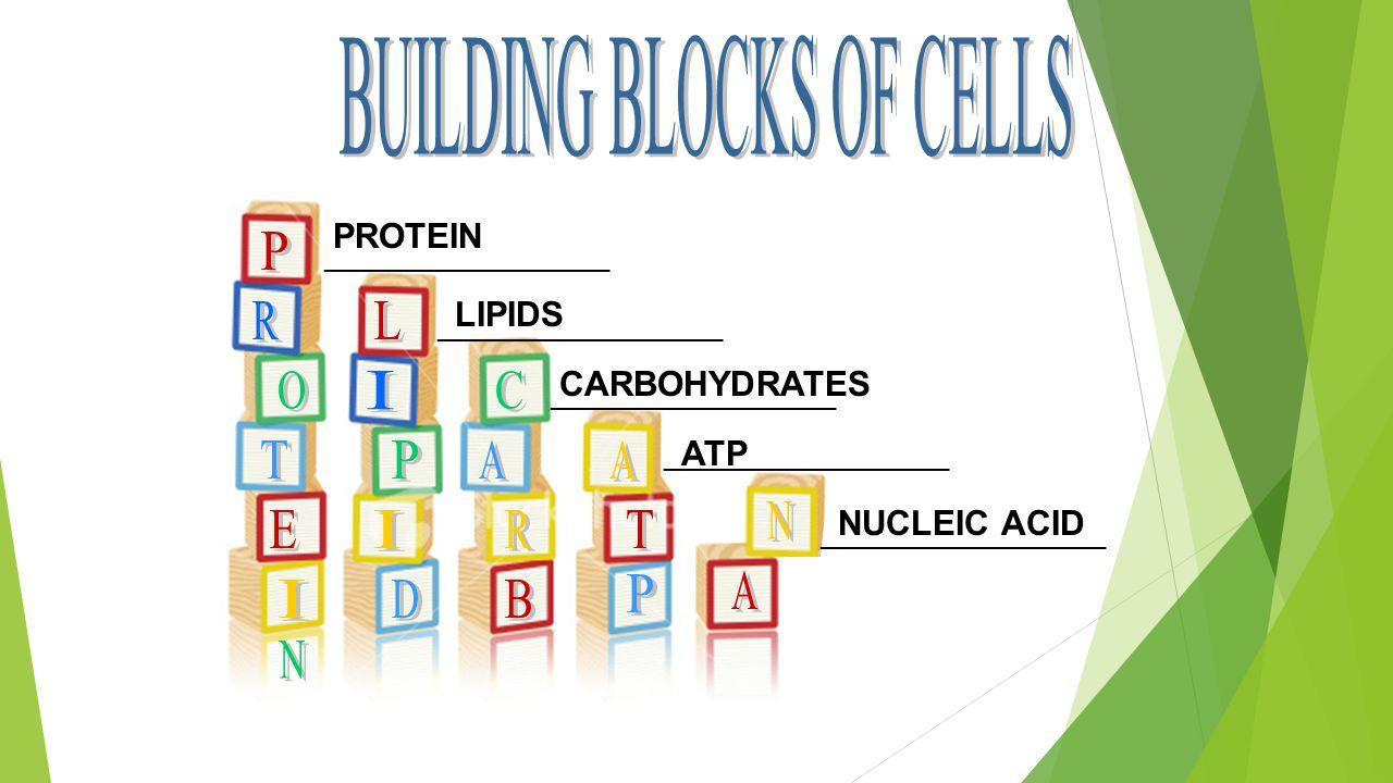 ____________________ PROTEIN LIPIDS CARBOHYDRATES ATP NUCLEIC ACID